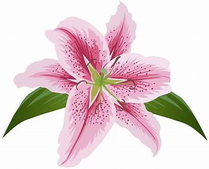 Transparent Flower Pink Clip Lily Clipart Sea