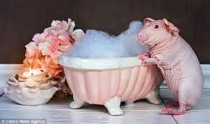 Guinea Pig Shower by Photographer Erin Bonilla Captures Strawberry Shortcake