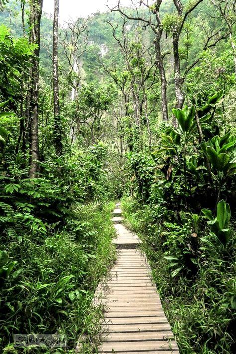 road  hana day   incredible pipiwai trail