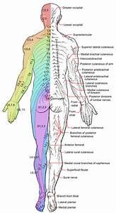 Axial Line  Dermatomes