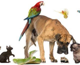 list  types  pets cute animal names
