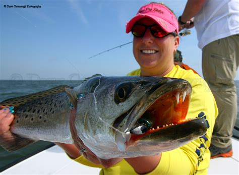 fishing florida saltwater doa trout lures tackle indian river spotted seatrout orlando guide shad floridainshorefishingcharters
