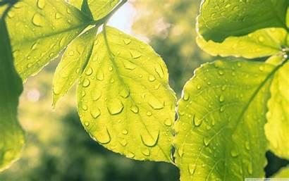 Droplets Leaves Ultrahd Tweet