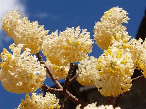 fiori gialli invernali giardini