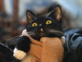 cat scarf cat scarf hd wallpaper 263925