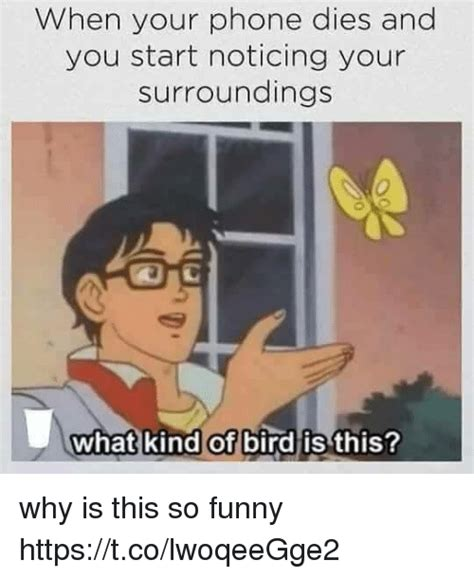 What Is The Meme - when your phone dies and you start noticing your surroundings 0 what kind of bird is this why