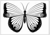 Butterfly Coloring Pages Drawing Printable Monarch Fun Cocoon Caterpillar Drawings Getdrawings Any Paintingvalley Resell Reproduce Provided Personal Form Please Been sketch template