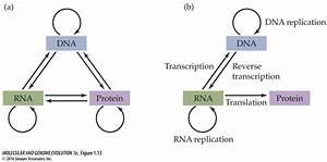 Judge Starling  U2014  U201cdna Makes Rna Makes Protein U201d Is Not The Central