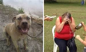 Grandmother Attacked By Pit Bull During Ice Bucket ...