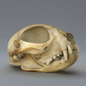3d Model Cat Skull