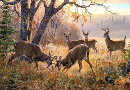 stag party forests nature background wallpapers