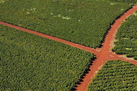 1000 x 250 jpeg 164 кб. The tenthousand coffees of Ethiopia - Direct Coffee
