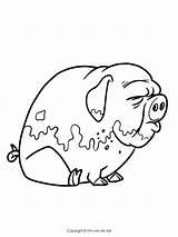 Pigs Coloring Pig Three Printable Drawing Marvelous Getdrawings Adult Elegant Bad Piggies Wolf Davemelillo sketch template