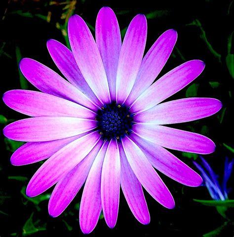purple flower weneedfun