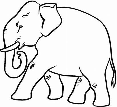 Elephant Coloring Pages Asian Printable Cartoon Results