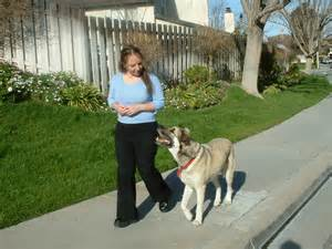 dogs that don t shed or smell train your dog now never have problems with a disobedient dog again