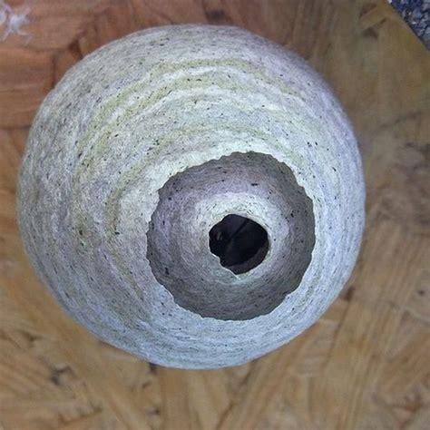 hausmittel gegen wespen die 15 besten hausmittel gegen wespen am tisch im dach