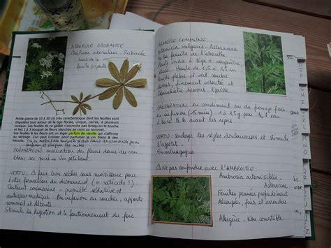cuisine plantes sauvages comestibles méthode pour savoir où récolter les plantes sauvages