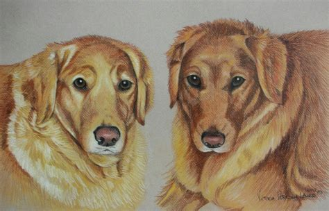 Ginger And Nutmeg Golden Retrievers Pet Portraits By