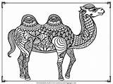 Camel Coloring Pages Printable Adult Realistic Camels Adults Downloads Want Previous sketch template