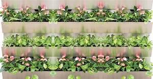 Pflanzen An Der Wand : gr ne wand f r alle pflanzen und jeden standort ~ Articles-book.com Haus und Dekorationen