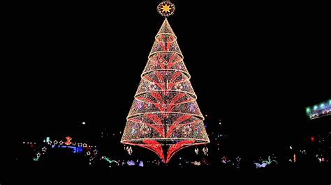 the tallest christmas tree in the philippines a 172 foot