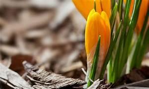 Quand Planter Des Dahlias : plantation de bulbes quand planter les bulbes la pause jardin ~ Nature-et-papiers.com Idées de Décoration