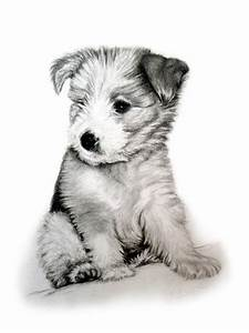 Bearded Collie Pup Drawing by Michelle Harrington