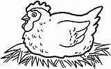 Chicken Coloring Pages Hen Rooster Chickens Printable Colouring Sheet Getcoloringpages Sitting Egg Farm Eggs sketch template