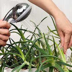Zimmerpflanzen Pflege Tipps : zimmerpflanzen pflege tipps zur pflege der topfpflanzen ~ Lizthompson.info Haus und Dekorationen