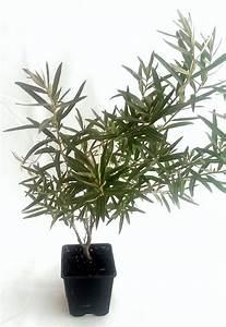 Sanddorn Pflanzen Kaufen : sanddorn pflanzen kaufen ~ Watch28wear.com Haus und Dekorationen