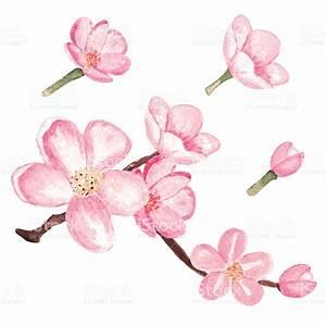 Sakura clipart chinese flower - Pencil and in color sakura ...