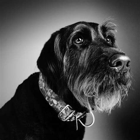 pet  animal photography zzzone photography studio