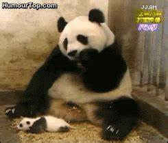 Baby Panda Lol GIF - Find & Share on GIPHY