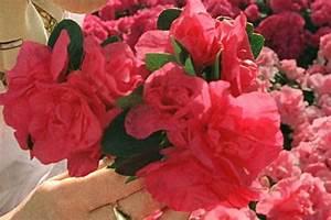 Zimmerpflanze Weiße Blüten : pflanzen als gl cksbringer radio salzburg ~ Markanthonyermac.com Haus und Dekorationen