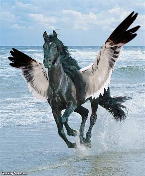 animals  wings pictures freaking news