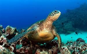 A Hawaii Snorkel To Save Maui U0026 39 S Reefs