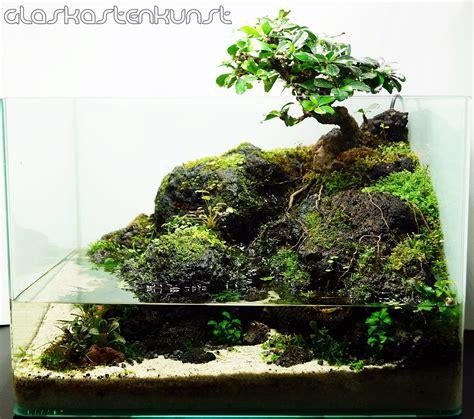 bonsai aquascape 35l bonsai paludarium aquascaping world forum