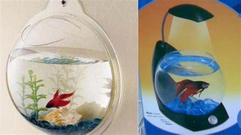 Cara Memelihara Ikan Cupang mata sedap memandang akuarium mini ikan cupang