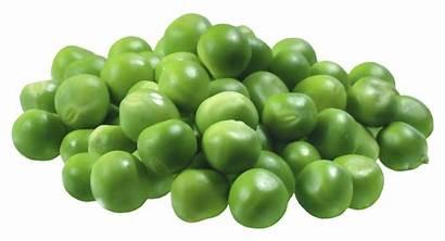 Pea Clipart Vegetables Peas Transparent Guisantes Clip