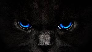Black Cat Blue Eyes | High Quality Wallpapers,Wallpaper ...