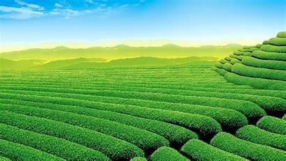Sawah Pertanian Hijau Tanaman Bukit Pedesaan Pemandangan
