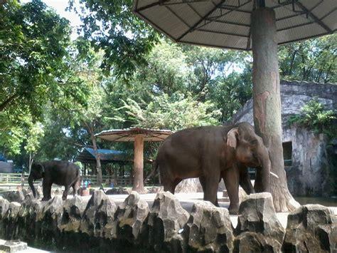 14 gambar pemandangan kebun binatang info top