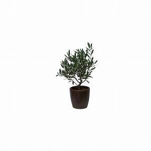 Cache Pot Plante : olivier cache pot bronze plantes et jardins ~ Teatrodelosmanantiales.com Idées de Décoration