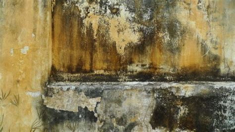 mouldy walls damp homes increase risk  breathlessness