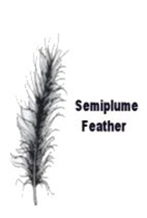 types  bird feathers