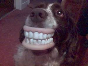 Pin Funny-human-teeth-dog-picture-free-dogs-pictures on ...