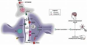 Potential mechanisms of fast antidepressant action of ...