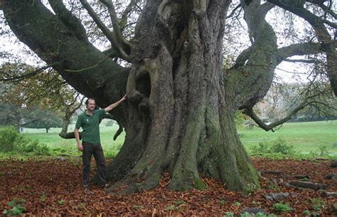 UK's largest horse chestnut tree declared