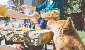 Schneckenkorn Giftig Für Hunde : vorsicht giftig diese 10 lebensmittel sollten hunde auf ~ Lizthompson.info Haus und Dekorationen